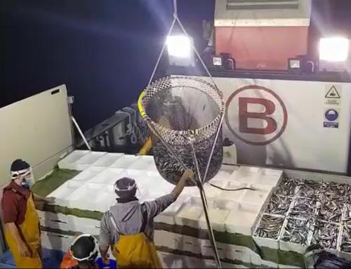 Boluda Fishing mantiene su esfuerzo en el estado de alarma para abastecer diariamente de pescado los mercados de alimentación